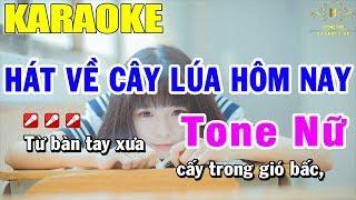 karaoke-hat-ve-cay-lua-hom-nay-tone-nu-nhac-song-trong-hieu