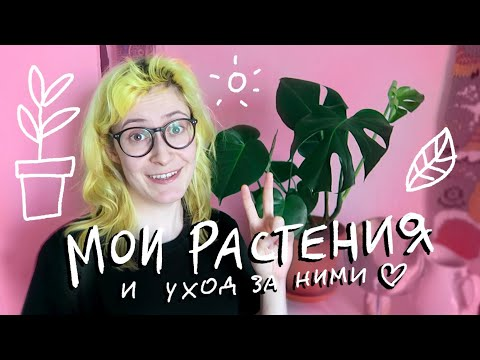 , title : 'Мои любимые растения и как я за ними ухаживаю | nixelpixel