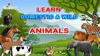 Learn Animal names for Kids in English | Domestic Animals & Wild Animals for Children - VIRAL ROCKET