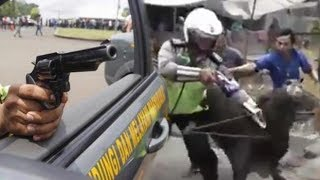 Jinakkan Sapi Ngamuk, Polisi di Medan sampai Todongkan Pistol