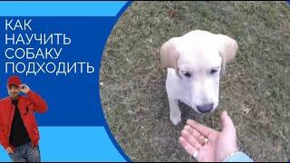 """Локи """"ко мне""""(один из способов,как научить собаку подходить)"""