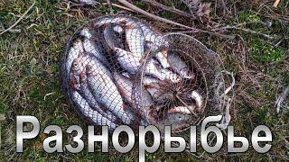 Отдых с рыбалку в украина 2020 николаев