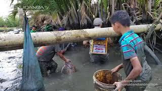 Tháo Đìa mùa khô ở Sài Gòn cá nhiều bắt không hết l Phần 1 : Bắt mỏi tay