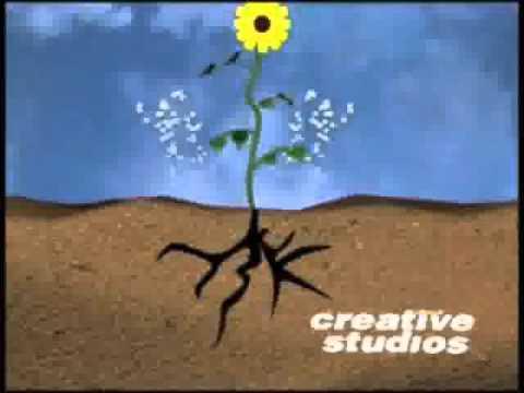 Vermiculture Film