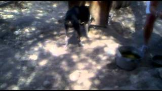 preview picture of video 'Charlie & Festos August 2010 Ag. Ioannis Crete Agia Marina Donkey Rescue'