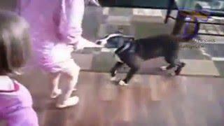 bebekler koruyan köpekler ve kediler  sevimli hayvan derleme