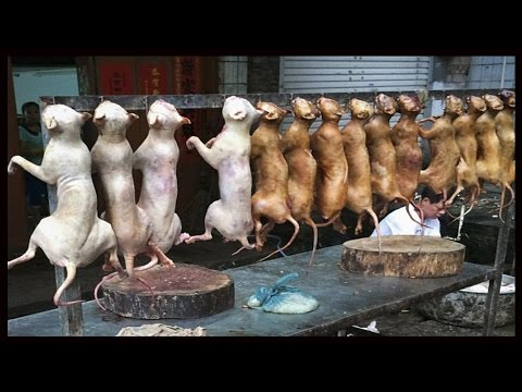Dog Meat Festival  In China   (shocked) Must Watch