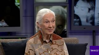 Jane Goodall on how Bigfoot might be real