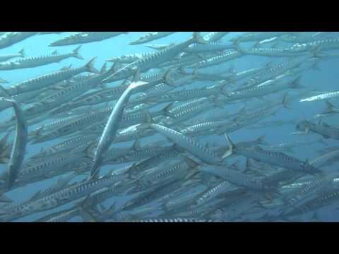 Unterwasserwelt Cap Creus - Roses, Cap Creus,Spanien