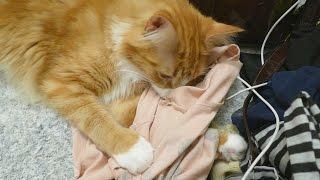 VLOG ★ My cat really likes my armpits