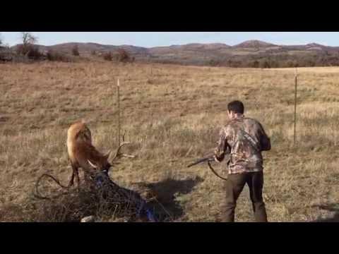 Hjorten trodde nok at døden var nær da jegeren løsnet skudd
