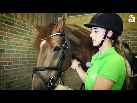 Rebeccas Tipps für Reiteinsteiger: Pferde satteln und trensen