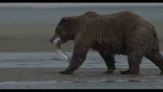 Video of the Week Lake Clark National Park Preserves coastal estuaries are