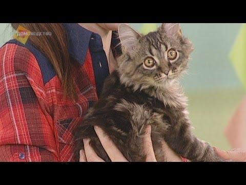 Уход за шерстью кошки. GuberniaTV
