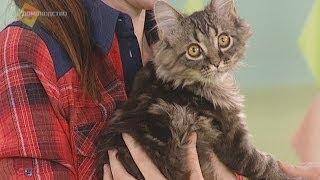 Смотреть онлайн Особенности ухода за шерстью кошек