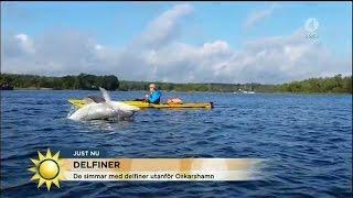 Simmar Och Paddlar Med Delfiner - I Östersjön - Nyhetsmorgon (TV4)
