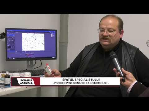 Papilloma and malignancy