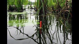 Май рыбалка поплавочная удочка весной как оборудовать