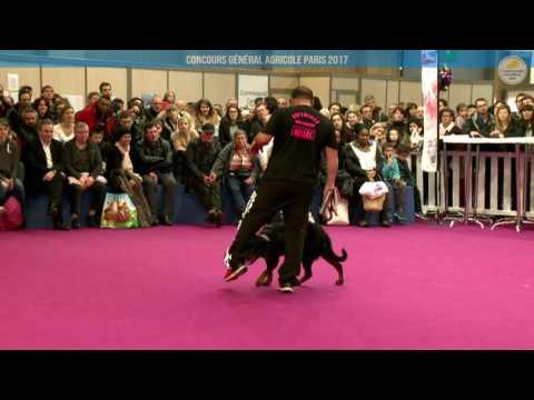 Voir la vidéo : Ring Canins du 05 mars 2017, partie 4