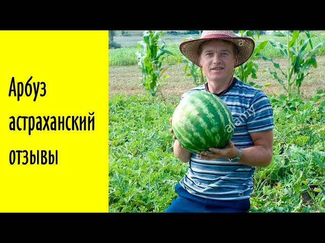 Видео Арбуз Астраханский