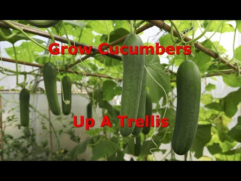 , title : 'How To Train Cucumbers Up A Trellis