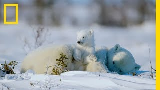 The Life Of A Baby Polar Bear - Ep. 4 | Wildlife: The Big Freeze