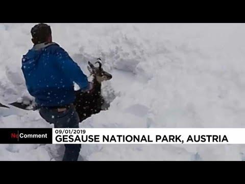 Αυστρία: Διάσωση κατσίκας από τα…χιόνια!