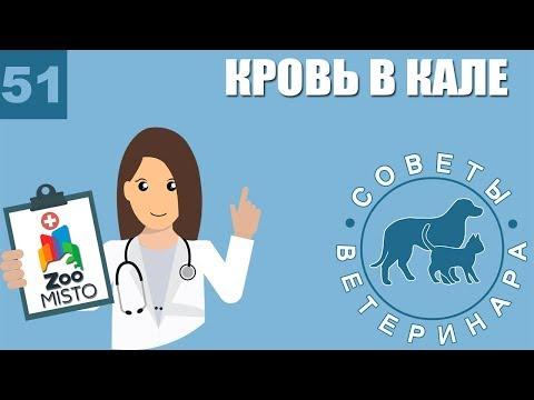 Кровь в кале у животных | Причины появления крови в кале | Лечение проблемы | Советы Ветеринара