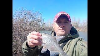 Ловля рыбы в светловодске на неделю