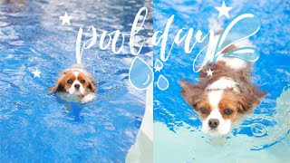 A DAY AT THE POOL DURING A HEAT WAVE // Cavalier King Charles Spaniel Vlog May 27 2020