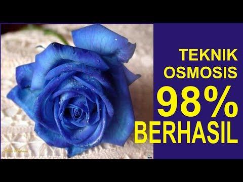 Video CARA MEMBUAT MAWAR BIRU DENGAN PROSES OSMOSIS