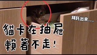 【黃阿瑪的後宮生活】貓卡在抽屜賴著不走!