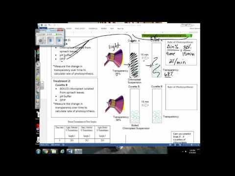 La mesure de la pression artérielle supérieure ou inférieure