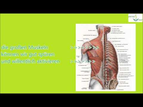 Bolscheberzowaja der Muskel klein - Die Vorbereitung der Muskeln auf ...