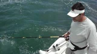 TWO Giant Bull Sharks ATTACK. Extreme Tarpon Fishing, Boca Grande, FL May 15 2010
