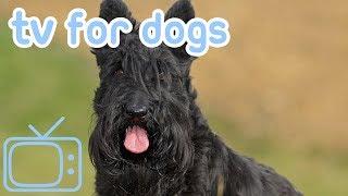 DogCalmTV:HoursofNature,WildlifeandCountrysideFootageforYourDog!
