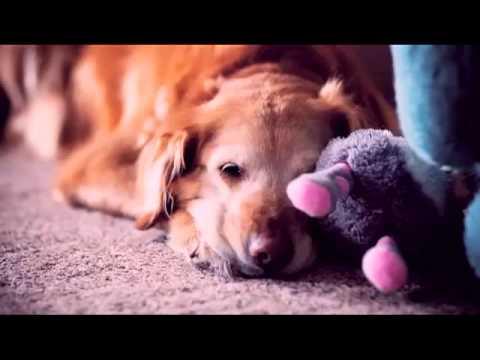 Beautiful: So God Made a Dog...