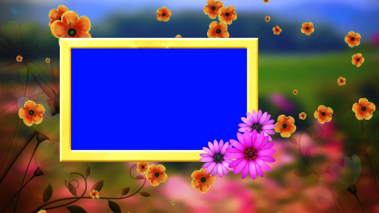 Video Hd Wedding Frame Blue Background Fallen Flowers Animated Video