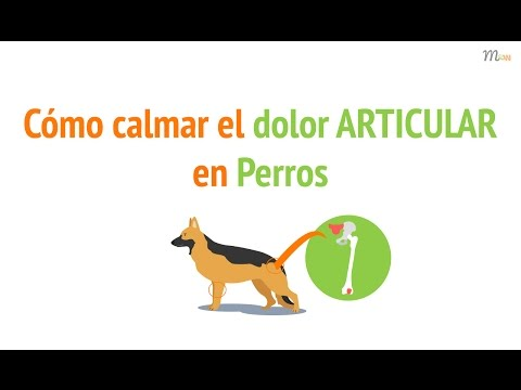 Cómo aliviar el dolor articular en perros | Mascoweb