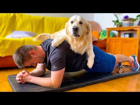 Οι... δυσκολίες της γυμναστικής όταν έχεις σκύλο