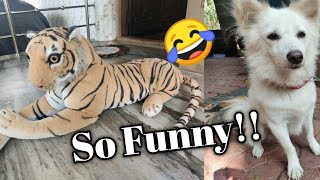 Dog vs Fake😍 Tiger