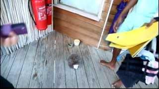 preview picture of video 'Over Water Villa in Six Senses Laamu Hotel Resort, Laamu Atoll, Maldives [PART 1]'