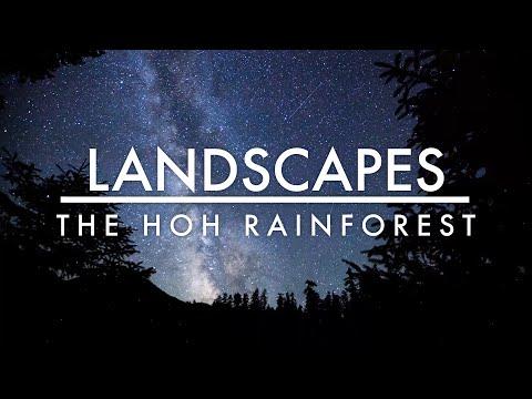 מסע מופלא לתוך יער הגשם הוה שבפארק הלאומי אולימפיק