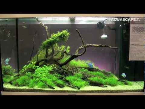 Aquascaping – Aquarium Ideas from Aquatics Live 2012, part 2