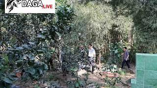 Tiền Giang - Cựu Đại uý Công an nổ súng tại điểm đá gà làm 1 người chết bị truy tố | daga.live