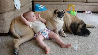 💪 Protection Dog -  Dogs Protecting Kids beacause they are best friend 😍