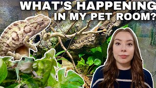 PET ROOM VLOG! | Pet Updates, Enclosure Upgrades + Vet Visits