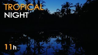 Gambar cover Tropical Night - Nature Sounds for Sleeping - Frogs & Crickets - 11 Hours Long - Relaxing HD Video