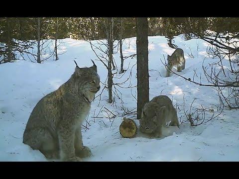 Negozi di Krasnodar di caccia e pesca