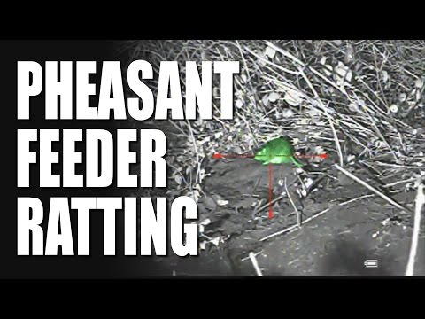 Pheasant Feeder Ratting